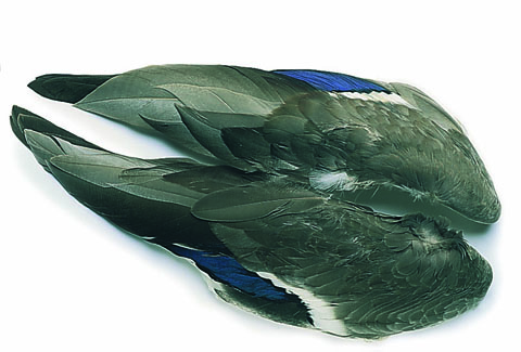 Mallard Duck Whole Wings (pair)
