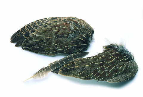 Cock Pheasant Wing Quills
