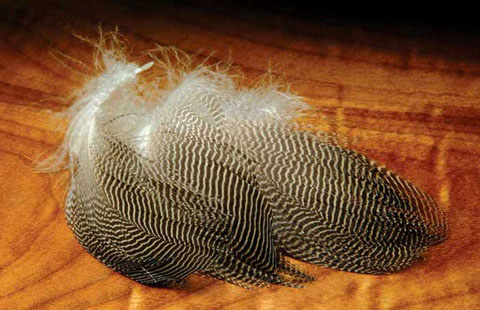 Gadwall Feathers