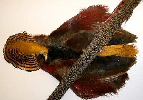 Golden Pheasant Complete