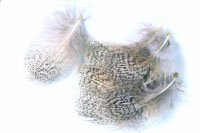 English Partridge Grey Neck Hackles - Natural or Dyed