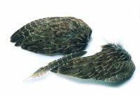 Partridge Wings - Natural