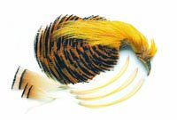 Golden Pheasant Complete Head Or Barred Tippet Collar