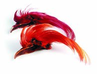 Golden Pheasant Topping Crest - Dyed Or Natural