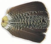 Partridge Tail - Complete Natural